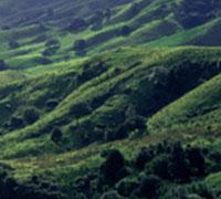 Le parc naturel du Haut Languedoc : un site naturel d'exception reconnu